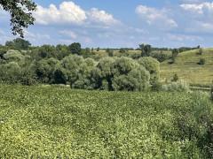 Купить земельный участок, с. Тростинка (Киевская область) на ул. Леси Украинки